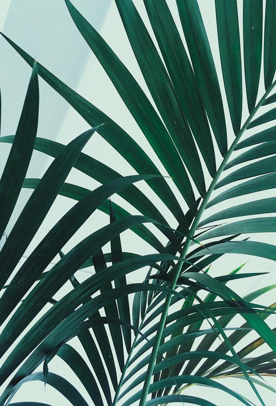 Palm Leaves tableau en verre