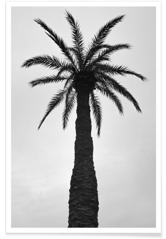 Noir & blanc, Palmiers, Palm Love affiche