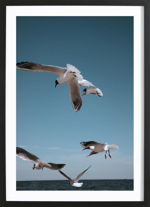 Seagulls II Framed Print