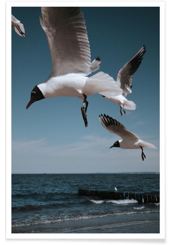 Seagulls, Seagulls VIII Poster