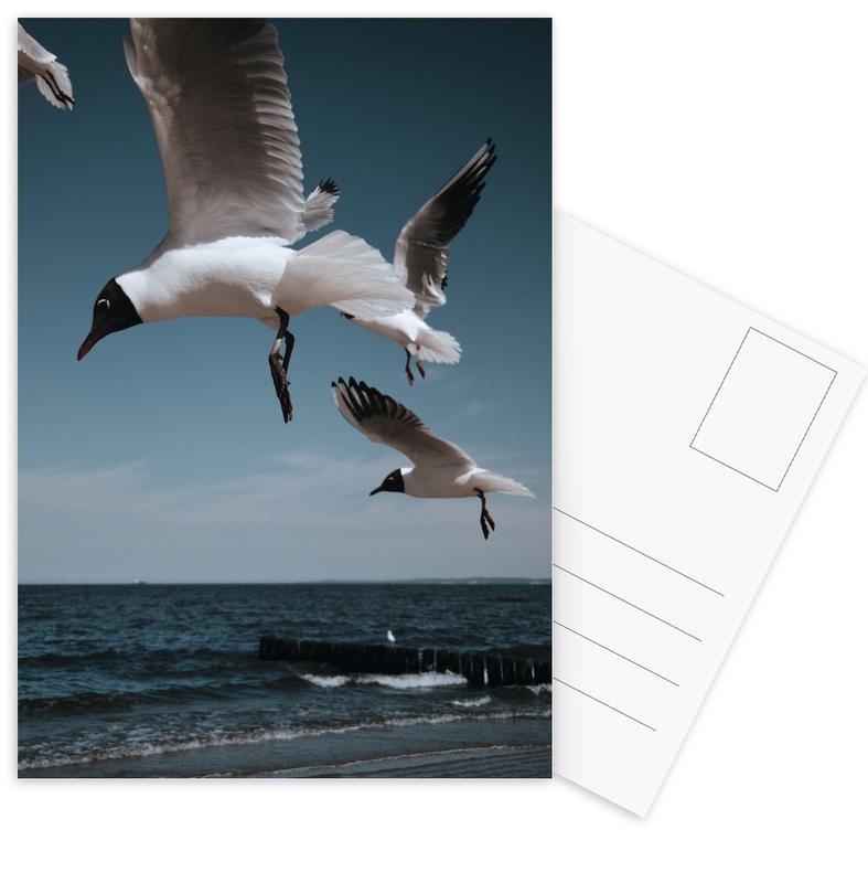 Seagulls VIII Postcard Set