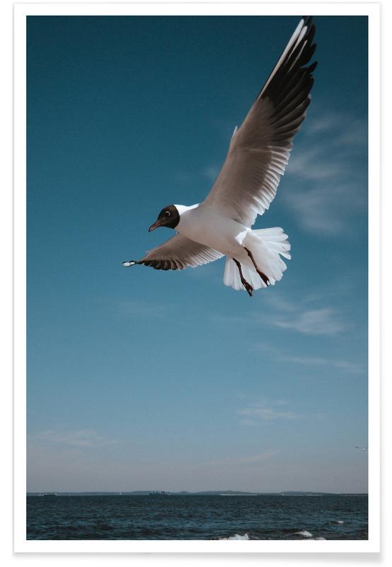Seagulls IX Poster
