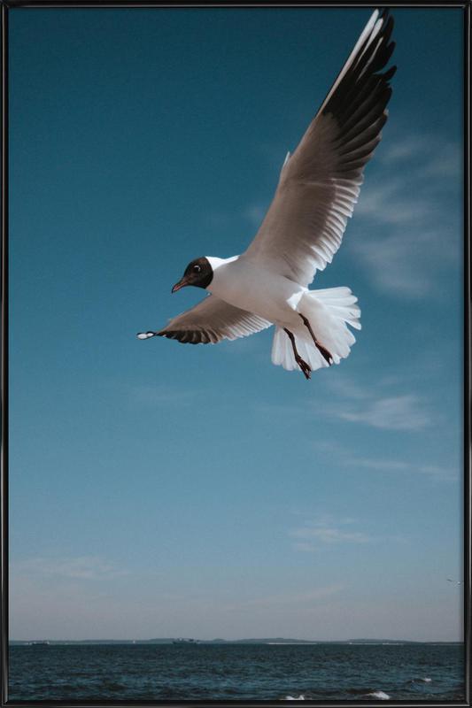 Seagulls IX Framed Poster