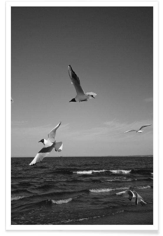 Mouettes, Noir & blanc, Seagulls III affiche