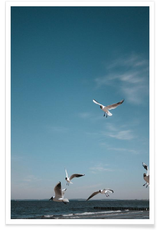 Måger, Seagulls IV Plakat