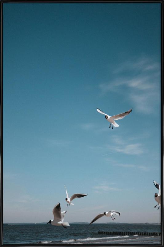 Seagulls IV ingelijste poster