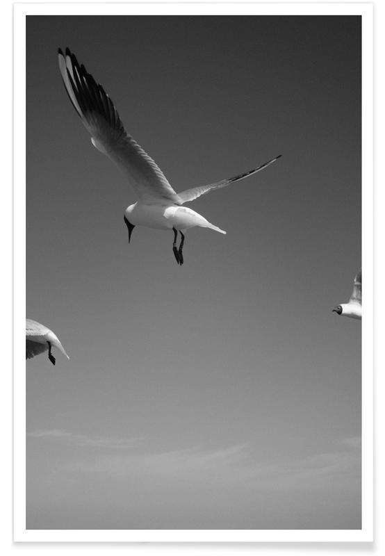 Mouettes, Noir & blanc, Seagulls V affiche