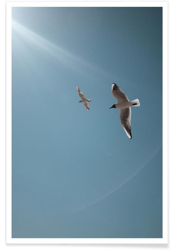 Seagulls VI Poster