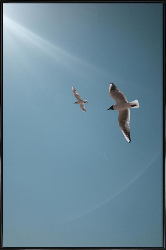 Seagulls VI affiche encadrée