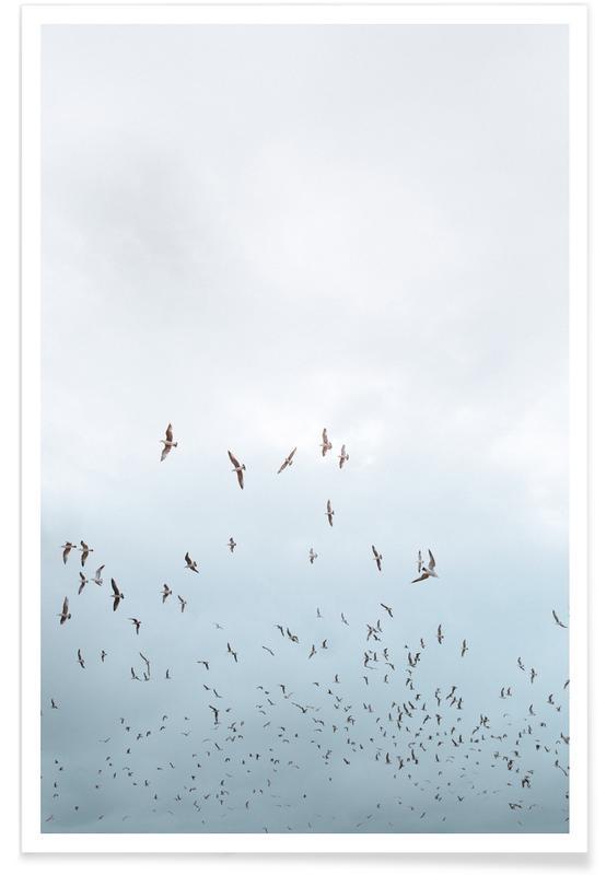 Meeuwen, Lucht en wolken, Birds in Porto poster
