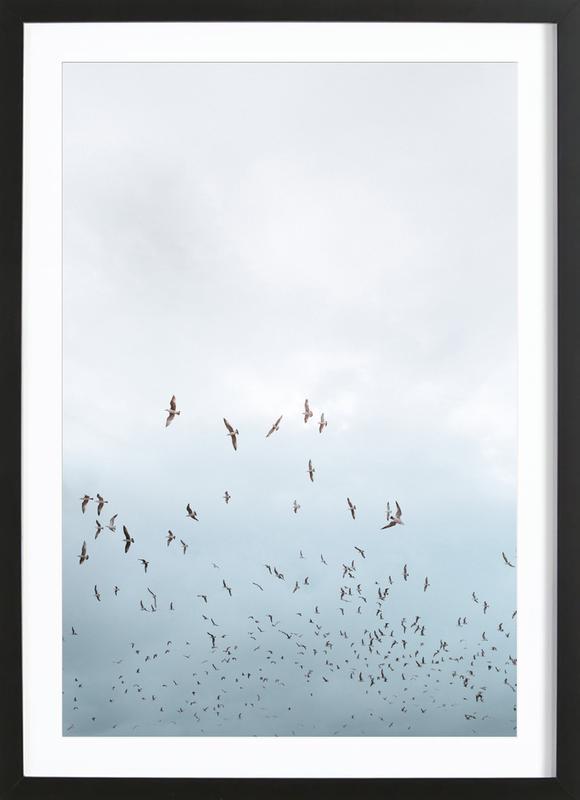 Birds in Porto ingelijste print