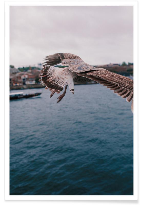 Måger, Seaside Plakat