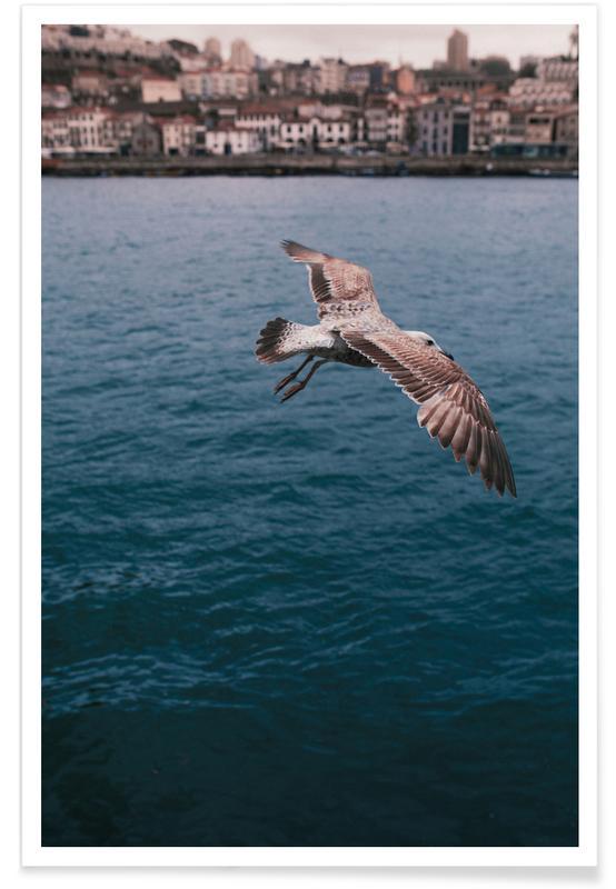 Mouettes, Seagull in Porto affiche