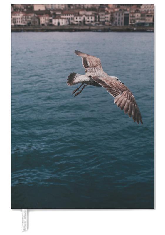 Meeuwen, Seagull in Porto agenda