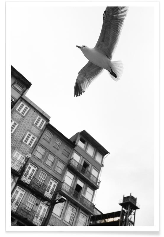 Seagulls, Black & White, Harbour Poster