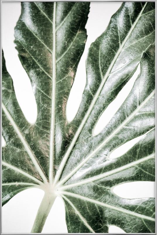Light Palm -Poster im Alurahmen