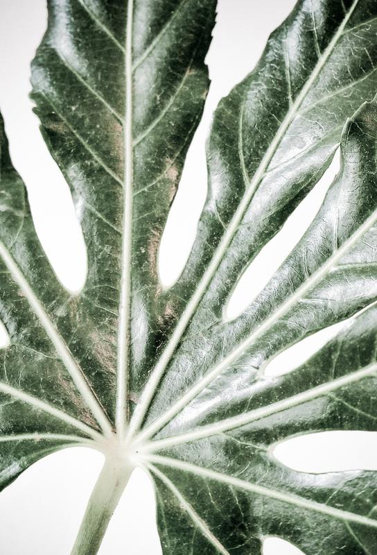 Light Palm -Acrylglasbild