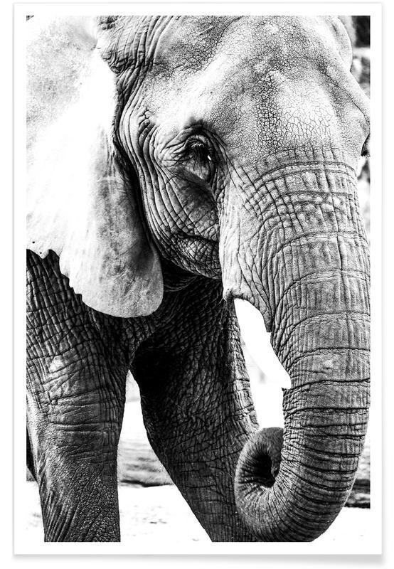 Noir & blanc, Éléphants, Elephant Trunk affiche