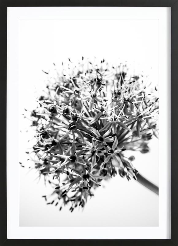 Lilly's Dandelion -Bild mit Holzrahmen
