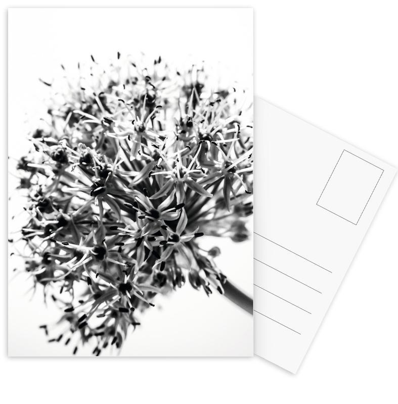 Lilly's Dandelion -Postkartenset