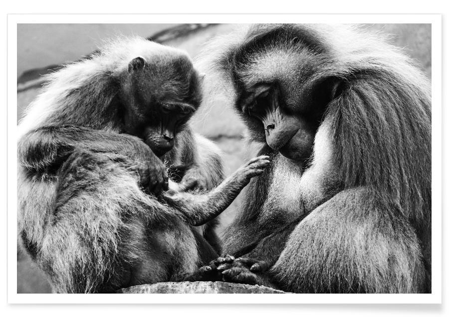 Monkey Family -Poster