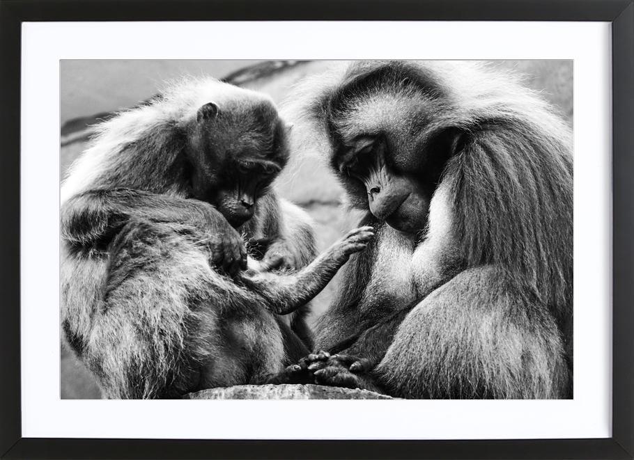 Monkey Family -Bild mit Holzrahmen