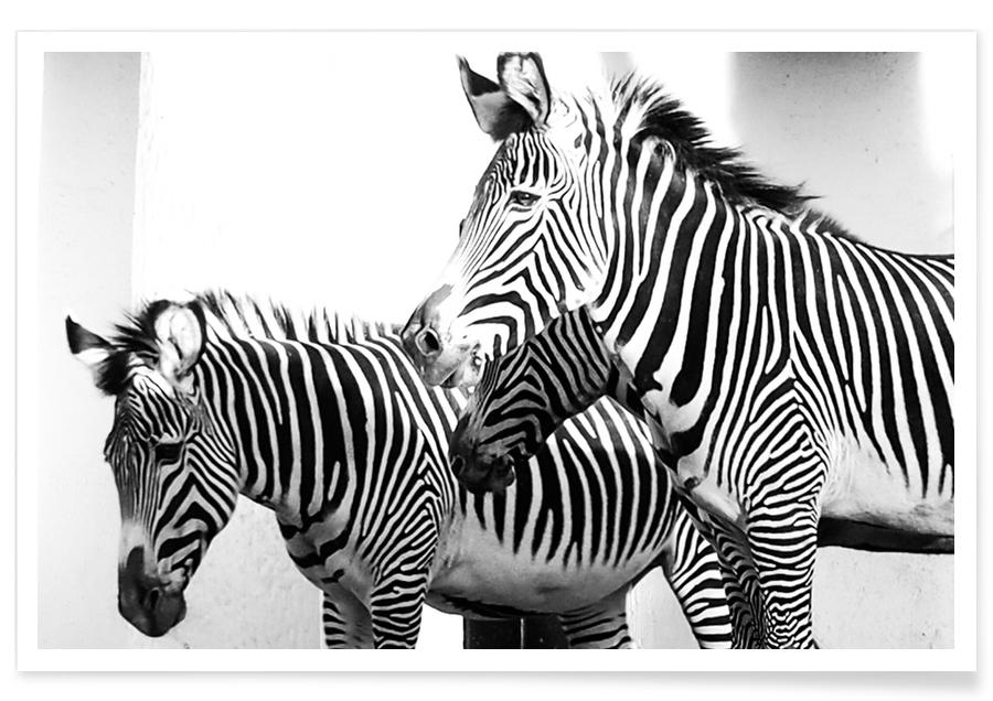 Zebra Stripes -Poster