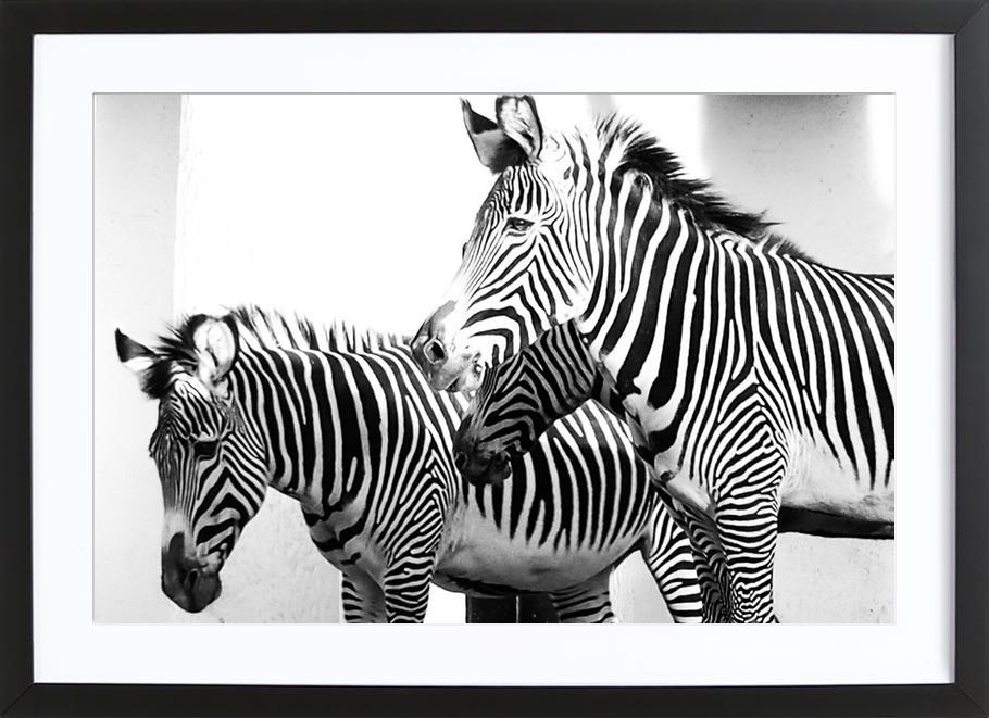 Zebra Stripes -Bild mit Holzrahmen