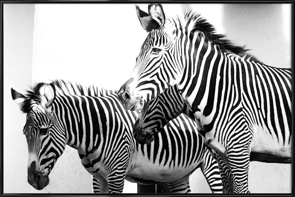 Zebra Stripes -Bild mit Kunststoffrahmen