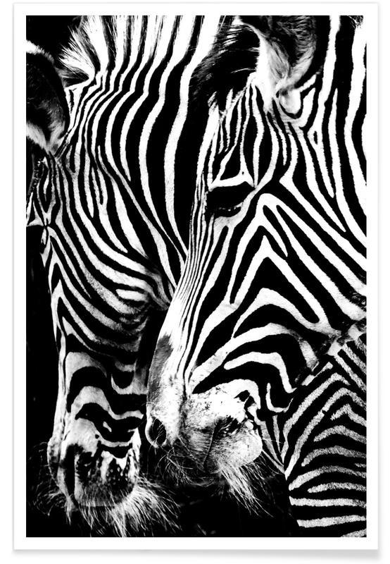 Zebra's, Zwart en wit, Zebra Hug poster