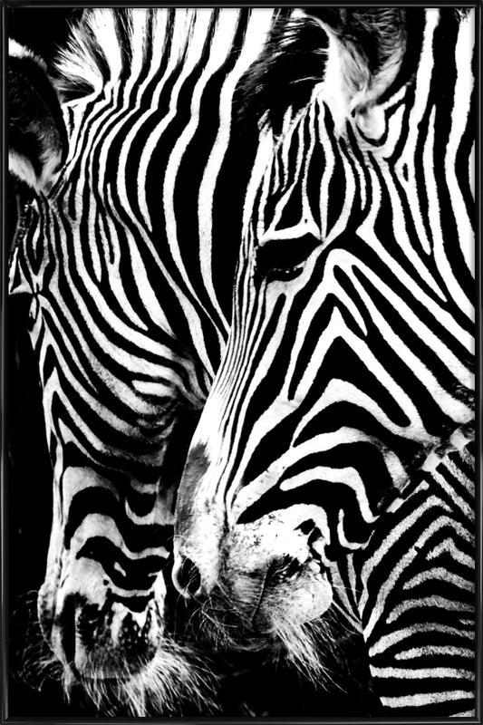 Zebra Hug -Bild mit Kunststoffrahmen