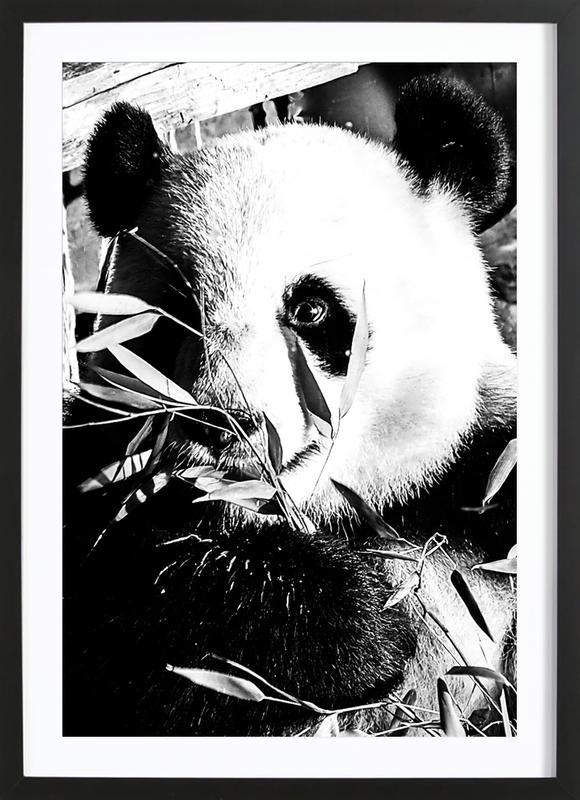 Hungry Panda -Bild mit Holzrahmen