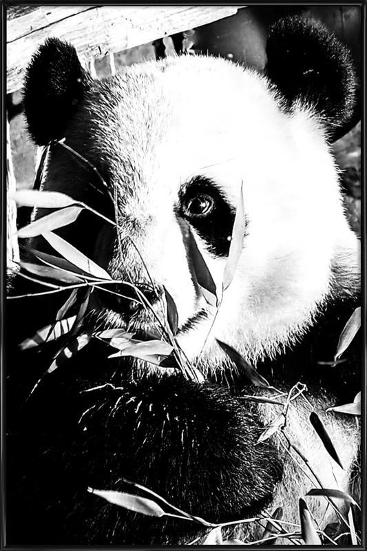 Hungry Panda -Bild mit Kunststoffrahmen