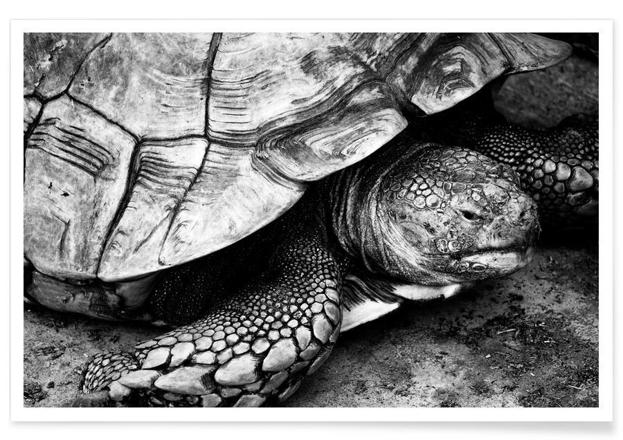 Black & White, Turtles, Tim the Turtle Poster