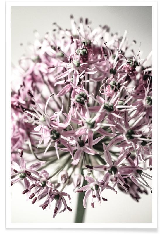 Marlies' Dandelion poster