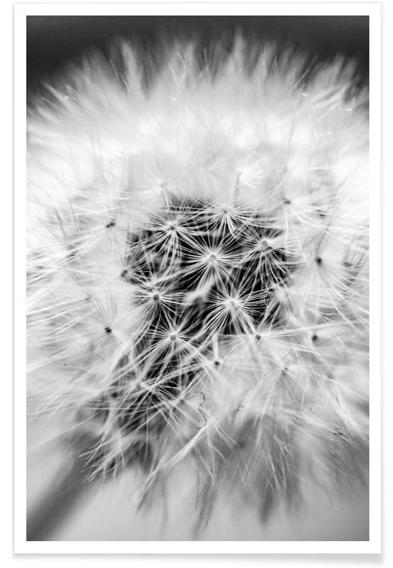 Pissenlits, Noir & blanc, Fragile Beauty affiche
