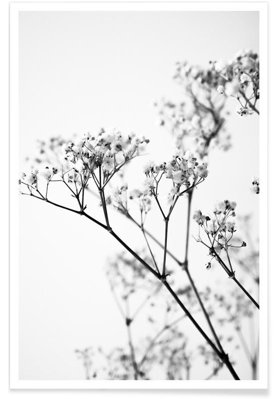 Zwart en wit, Bladeren en planten, Deni's Baby Breath poster