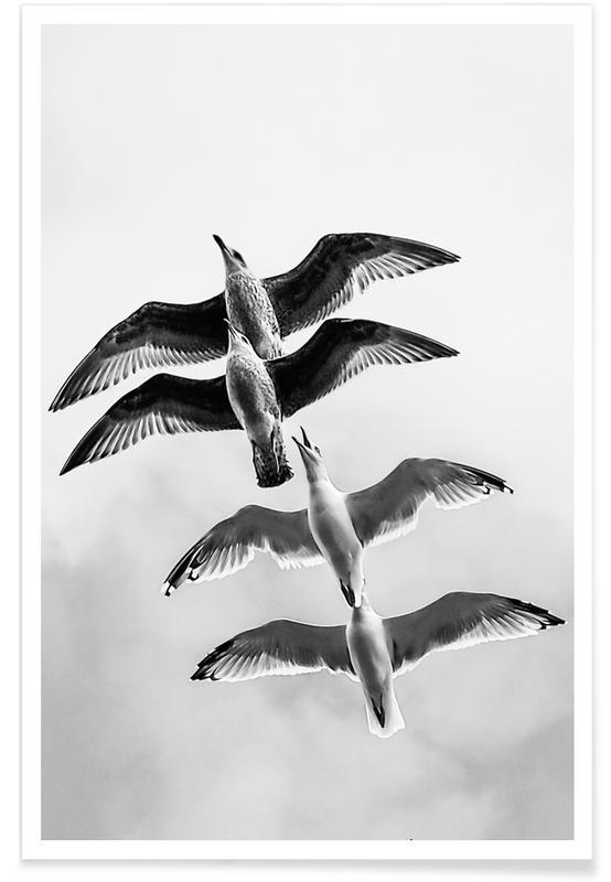 Mouettes, Noir & blanc, Soaring Seagulls affiche