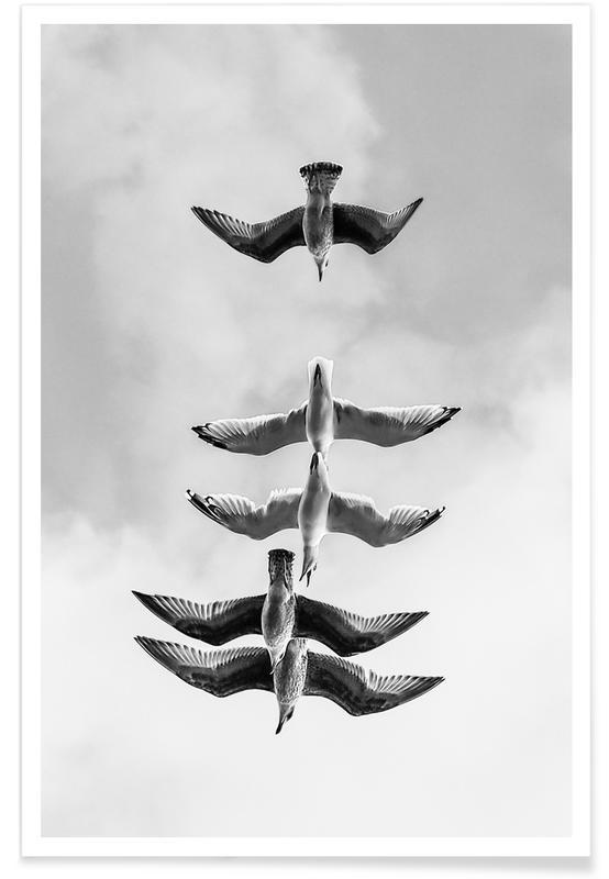 Måger, Sort & hvidt, Downward Seagulls Plakat