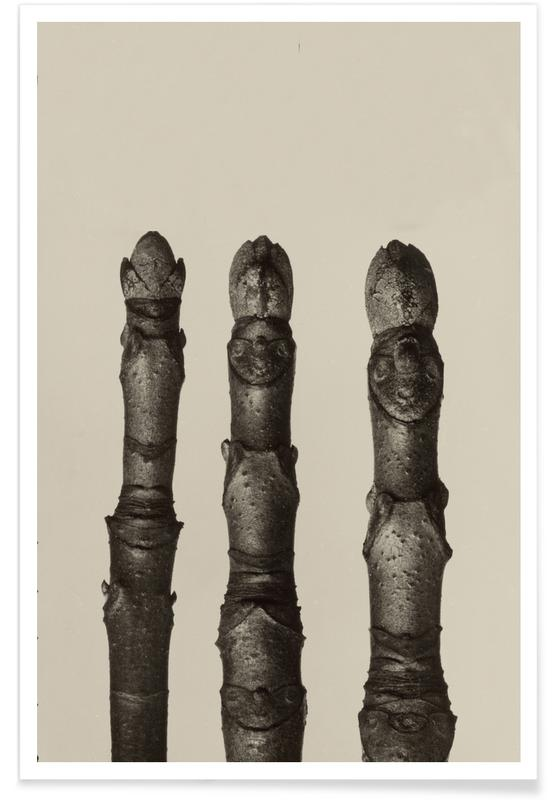 Aesculus Parviflora, 1928 - Karl Blossfeldt Poster