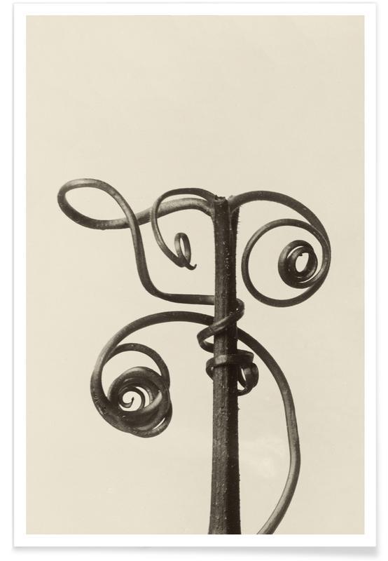 Cucurbita - Karl Blossfeldt Poster