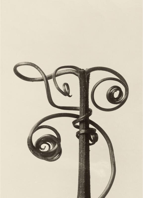 Cucurbita - Karl Blossfeldt -Leinwandbild
