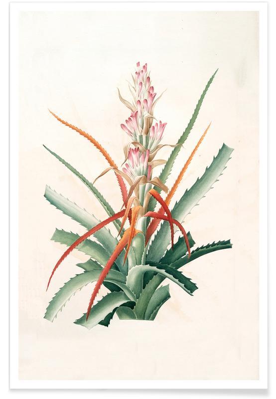 Ananas sauvage, Bromelia Pinguin affiche