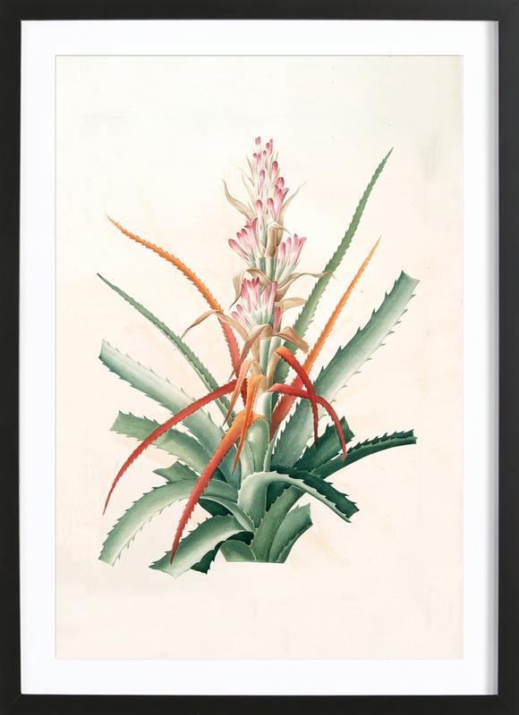 Ananas sauvage, Bromelia Pinguin Framed Print