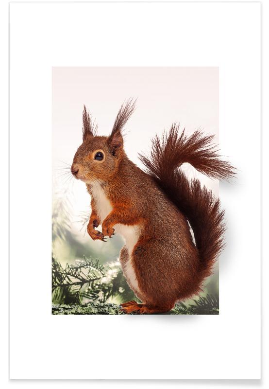 Egern, Børneværelse & kunst for børn, SQUIRREL Plakat