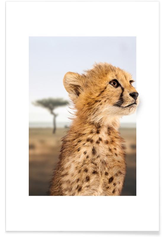 Nursery & Art for Kids, Cheetahs, CHEETAH CUB Poster