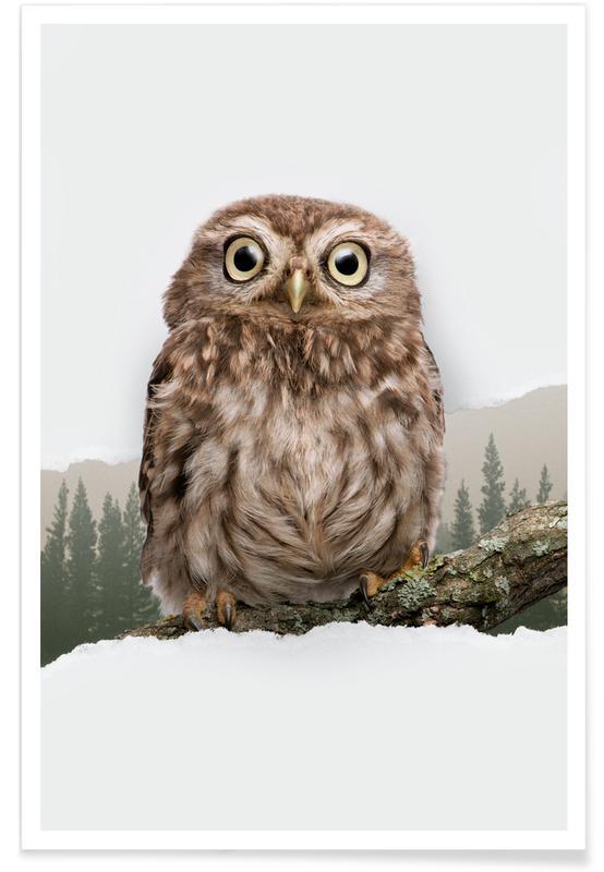 Kunst voor kinderen, Owl Torn Paper poster