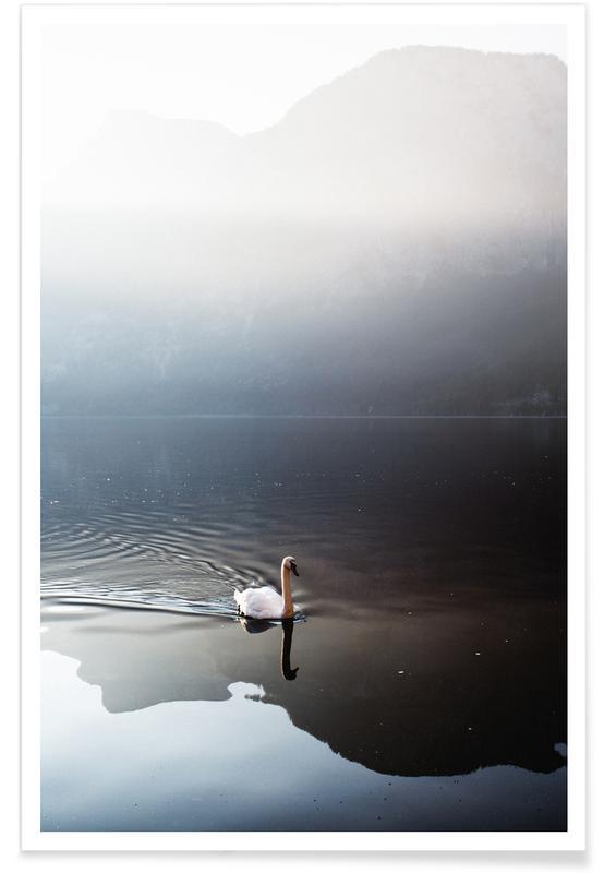 Océans, mers & lacs, Cygnes, The Swan affiche