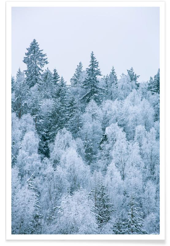 Forêts, Arbres, Frosted Firs affiche