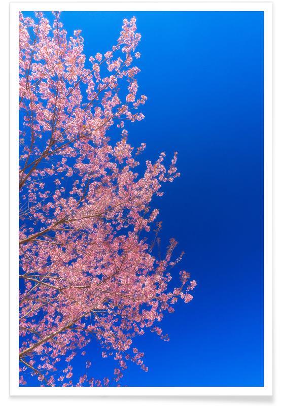 Cherry Blossom, Japan Plakat
